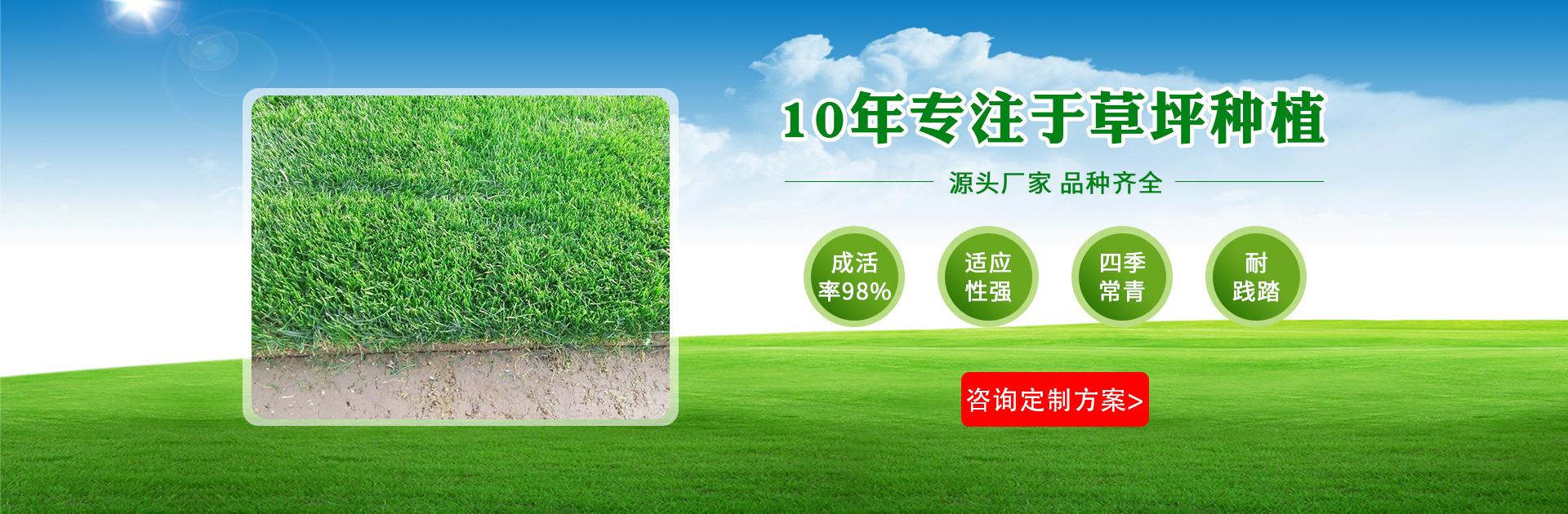 重庆真草坪