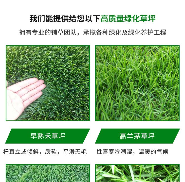 重庆绿化草坪批发价