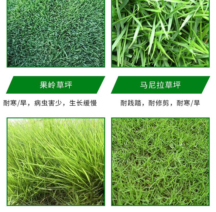 重庆绿化草坪