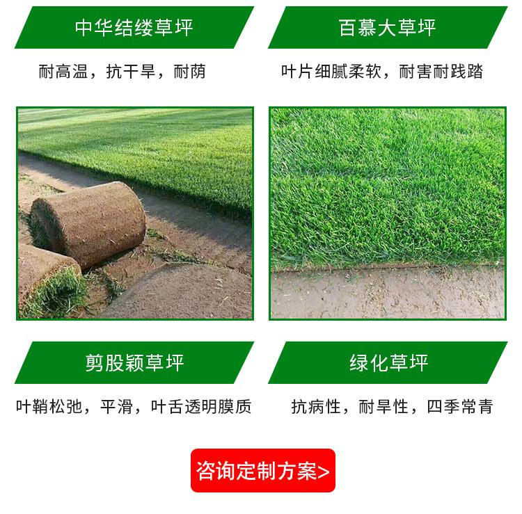 重庆草皮价格