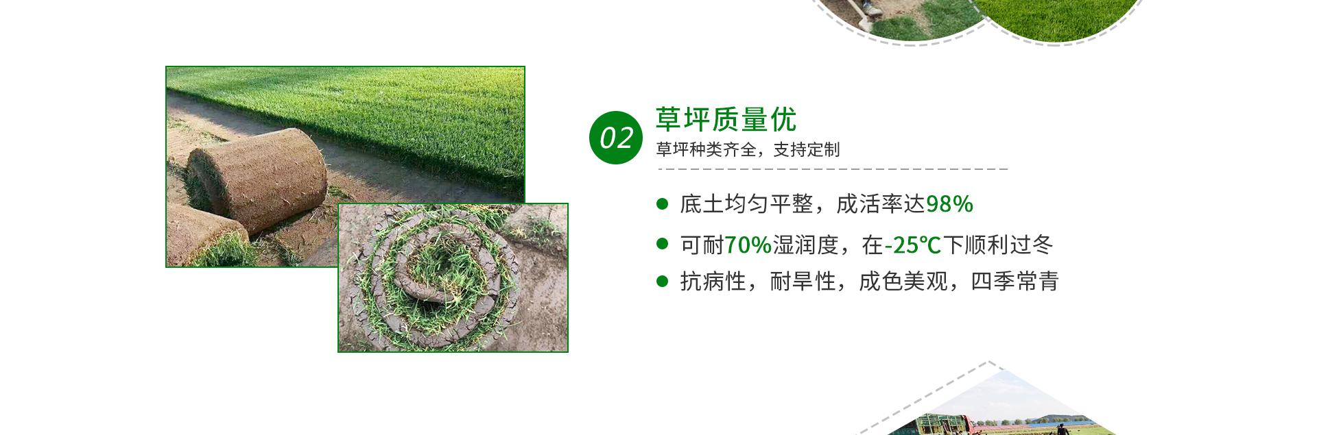 重庆真草坪价格
