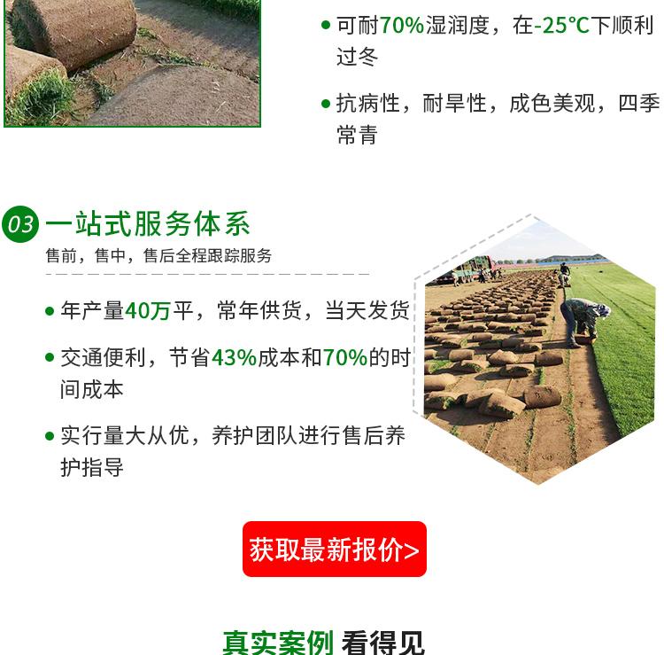 绿化草皮基地