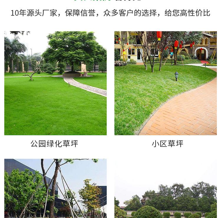 重庆草坪报价