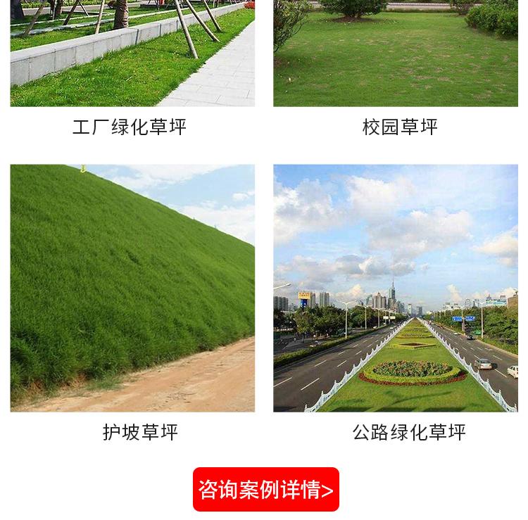 重庆草皮基地